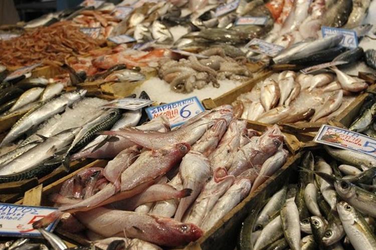 Περισσότερα ψάρια στη θαλάσσια υπηρεσία γνωριμιών