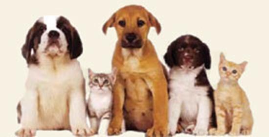 κτηνίατρος γνωριμιών E25 προτιμησιακό προξενιό